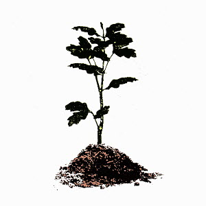 Young tree growing from soil