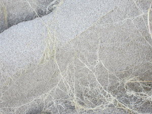 Plant roots on marble surface