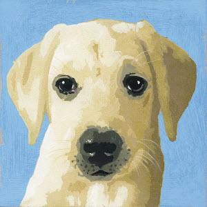 Portrait of Labrador puppy dog
