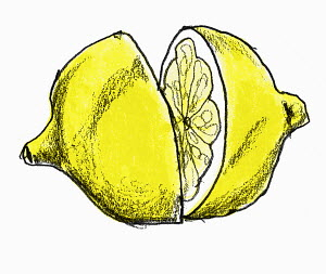 Halved lemon on white background