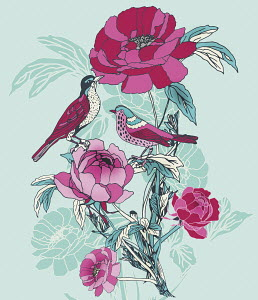 Colorful birds and roses