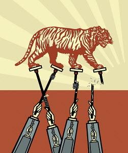 Tiger walking on breaking sticks