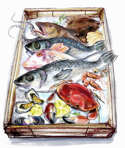 Variation of fish and seafood on tray - Variation of fish and seafood on tray