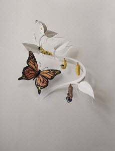 Stages of butterfly metamorphosis in paper art