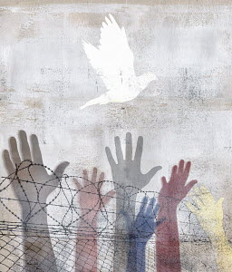 Hands reaching up to peace dove above barbed wire fence