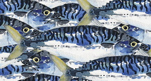 Full frame watercolour painting of mackerel fish