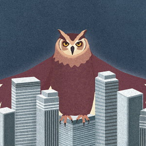 Large owl sheltering the city business district