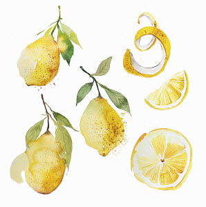 Watercolour painting of lemons