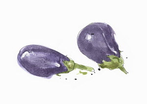 Watercolour painting of aubergines