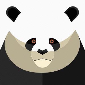Close up of panda's face looking at camera