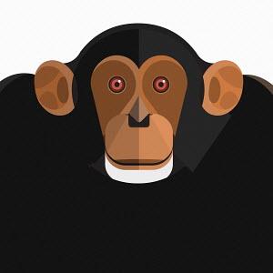 Close up of chimpanzee's face looking at camera