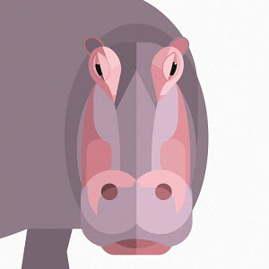 Close up of hippopotamus looking at camera