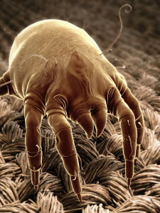 Digitally generated image of a mite