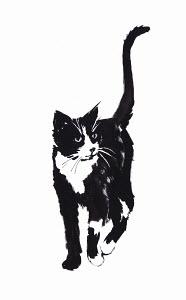 Illustration of black and white cat