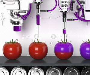Automated production line producing genetically modified tomatoes