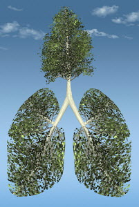 Tree growing from green lungs