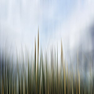Abstract blurred grass against blue sky