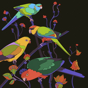 Four brightly coloured parrots