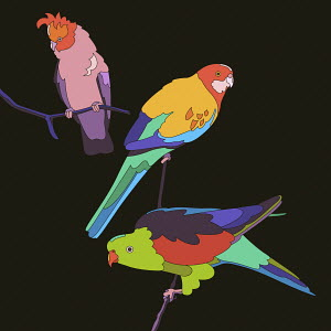 Three brightly coloured parrots