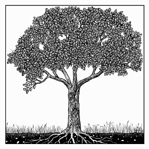 Black and white drawing of tree in summer