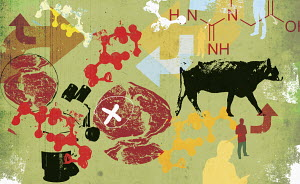 Scientific study of meat from beef cattle