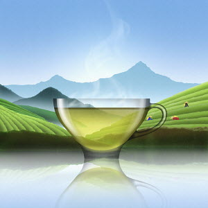 Glass of Chinese green tea in tea plantation landscape