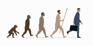 Stages in evolution of modern businessman from ape