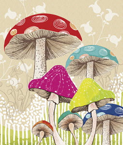Multi coloured toadstools