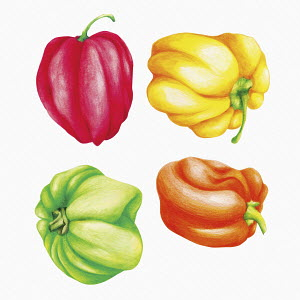 Different colour Scotch Bonnet chillies
