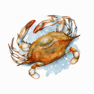 Soft-shell crab