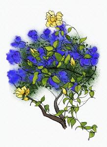 Rambling yellow rose climbing through purple blossom
