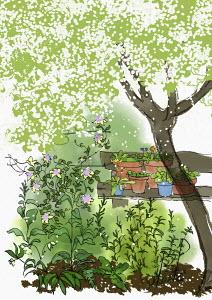 Plants in pots on bench in pretty garden