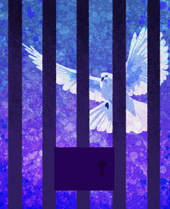 White dove behind prison bars