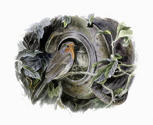 Illustration of robin with nest in overturned pot