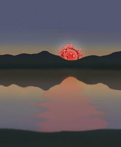 Coronavirus micro organism as setting sun