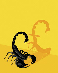 Scorpion sting forming pound shaped shadow
