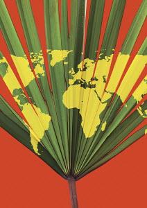 World map on palm leaf
