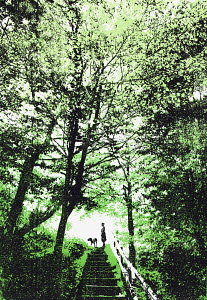 Woman walking dog in woodland