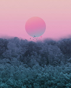 Pink sun in mist above forest