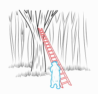 Bear leaning ladder against tree