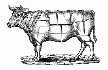 Black and white scraperboard engraving of cow divided into sections