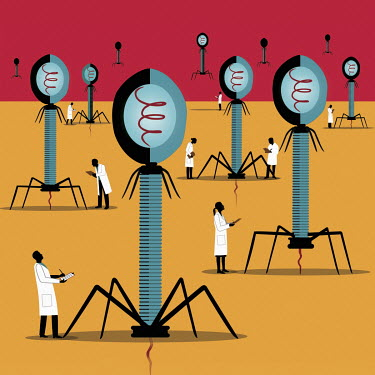 Scientists studying bacteriophages