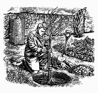 Scraperboard engraving of man planting tree on cold autumn day
