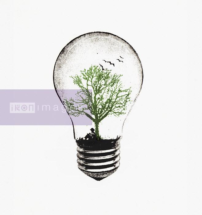 Tree growing in light bulb - Tree growing in light bulb - Katie Edwards