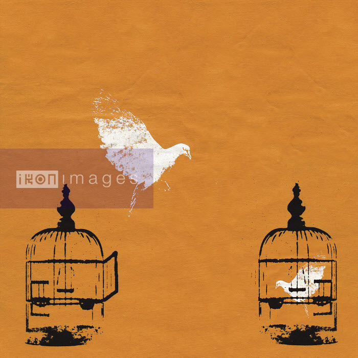 Dove escaping birdcage and bird trapped in birdcage - Dove escaping birdcage and bird trapped in birdcage - Katie Edwards