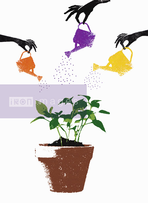 Hands with watering cans watering seedling growing in plant pot - Hands with watering cans watering seedling growing in plant pot - Katie Edwards
