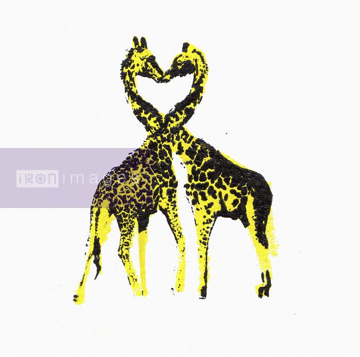 Two giraffes face to face with necks forming heart shape - Katie Edwards