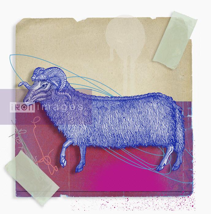 Montage of zodiac Aries - Montage of zodiac Aries - Matt Herring