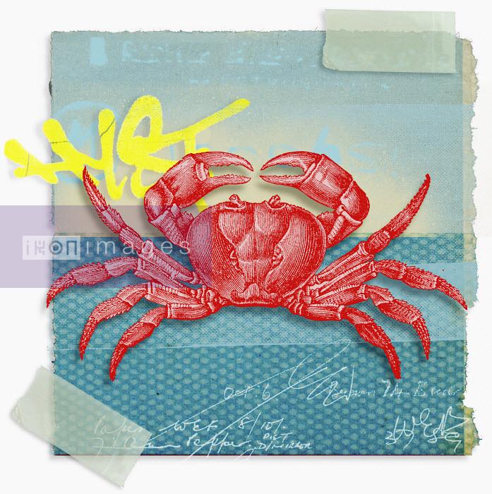 Montage of zodiac Cancer - Montage of zodiac Cancer - Matt Herring