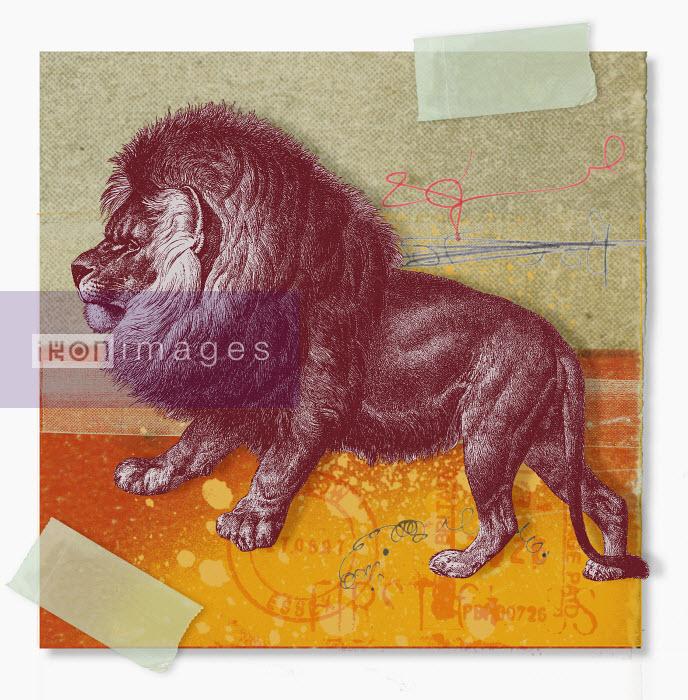 Montage of zodiac Leo - Montage of zodiac Leo - Matt Herring